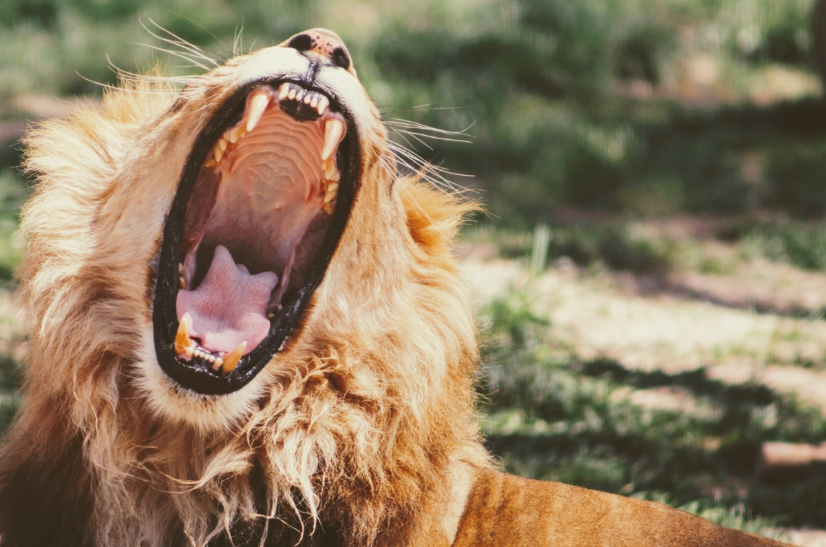 You're gonna hear me roar - Katy Perry - Wellbeing blog
